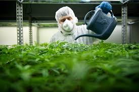 grow facility